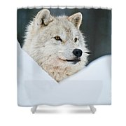 Arctic Wolf Pictures 1144 Shower Curtain