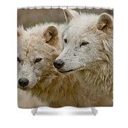 Arctic Wolf Pictures 1174 Shower Curtain