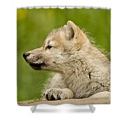 Arctic Wolf Pictures 340 Shower Curtain