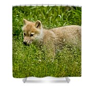 Arctic Wolf Pictures 341 Shower Curtain
