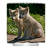 Arctic Wolf Pictures 346 Shower Curtain