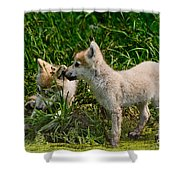 Arctic Wolf Pictures 347 Shower Curtain