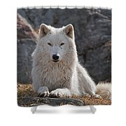 Arctic Wolf Pictures 518 Shower Curtain