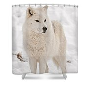 Arctic Wolf Pictures 844 Shower Curtain
