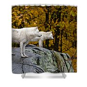 Arctic Wolf Pictures 930 Shower Curtain