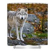 Arctic Wolf Pictures 942 Shower Curtain