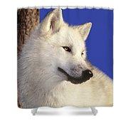 Arctic Wolf Portrait Wildlife Rescue Shower Curtain