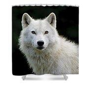 Arctic Wolf Portrait Shower Curtain