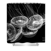 Area 51 - Moon Jellies Aurelia Labiata Shower Curtain