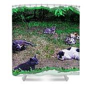 Argentina Cat Park Shower Curtain