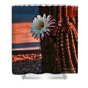 Argentine Cactus Shower Curtain