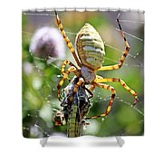 Argiope Spider And Grasshopper Vertical Shower Curtain