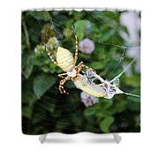Argiope Spider Top Side Horizontal Shower Curtain