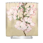 Ariake - Daybreak - Vintage Japanese Watercolor Shower Curtain