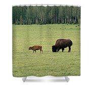 Arizona Bison Shower Curtain