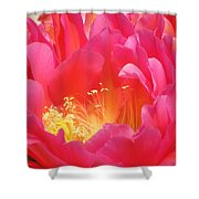 Arizona Cactus Beauty Shower Curtain