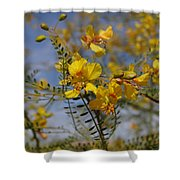 Arizona Gold Shower Curtain