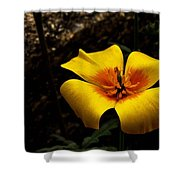 Arizona Poppy Shower Curtain