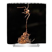 Army Ants Building Bivouac Shower Curtain