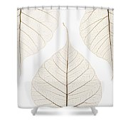 Arranged Leaves Shower Curtain