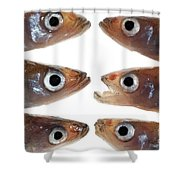 Arrangement Of Small Fish Smelt Shower Curtain