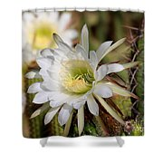 Array Of Night Bloomers Shower Curtain