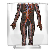 Arteries And Veins Of The Human Body Shower Curtain