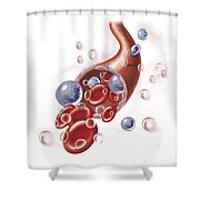 Arteriole With Red Blood Cells, White Shower Curtain