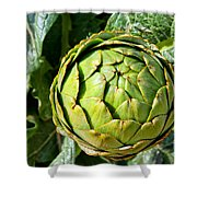 Artie Choke - Artichokes By Diana Sainz Shower Curtain