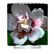 Artistic Shades Of Light And Pollinating Bee Shower Curtain