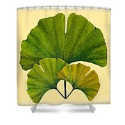 Arts And Crafts Movement Ginko Leaves Shower Curtain