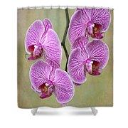 Artsy Phalaenopsis Orchids Shower Curtain