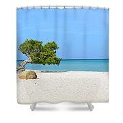 Aruba Divi Divi Tree Shower Curtain