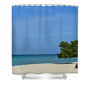 Aruba Divi Tree Shower Curtain