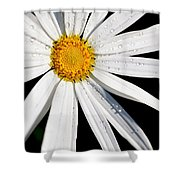 As Bright As A Daisy... Shower Curtain
