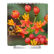 Asclepias Curassavica And Bee Shower Curtain