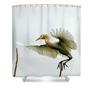 Asia Shower Curtain