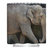 Asian Elephant Shower Curtain