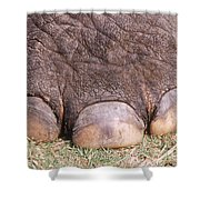 Asian Elephant Foot Shower Curtain