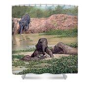 Asian Elephants - In Support Of Boon Lott's Elephant Sanctuary Shower Curtain