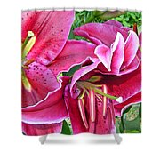 Asian Lily Flowers Shower Curtain