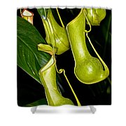 Asian Pitcher Plant Shower Curtain