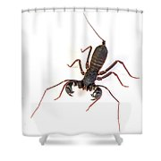 Asian Whipscorpion Shower Curtain