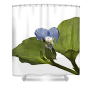 Asiatic Day Flower Shower Curtain