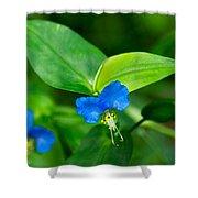 Asiatic Dayflower Shower Curtain