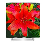 Asiatic Hybrid Lily Shower Curtain