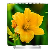 Stella De Oro Lilly Shower Curtain