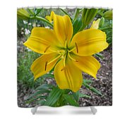 Asiatic Lily 2 Shower Curtain