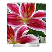 Asiatic Lily- Asiatic Lily Paintings- Pink Paintings Shower Curtain