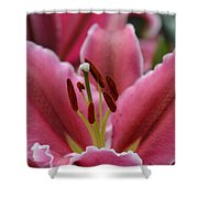 Asiatic Pink Shower Curtain